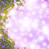Wild violet border Stock Photo