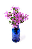 Wild violet flowers in blue bottle Royalty Free Stock Image