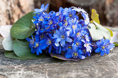 Wild violet flowers bouquet Stock Photography