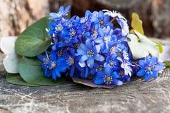 Wild violet flowers bouquet Stock Photography