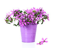 Wild violet flowers in bucket i Royalty Free Stock Image
