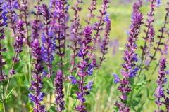 Wild visa blommor Arkivfoton