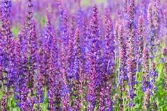 Wild visa blommor Arkivbild