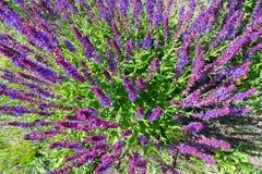 Wild visa blommor Arkivbilder