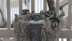 Wild vogelsland op een planter die voedsel zoeken stock video