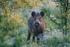 wild voronezh för ryss för områdesgaltnatur royaltyfria foton