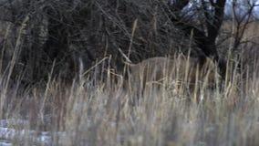 wild voronezh för ryss för områdesgaltnatur lager videofilmer