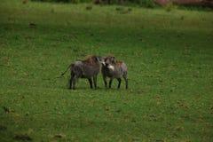 wild voronezh för ryss för områdesgaltnatur arkivbilder