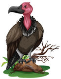 Wild vulture on the rock Royalty Free Stock Photos