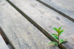Wild wachsende Pflanze, die oben steigt Lizenzfreie Stockbilder