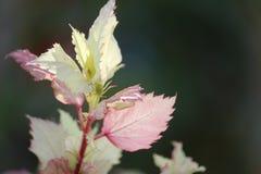 Wild wachsende Pflanze schattierte Blätter lizenzfreies stockfoto