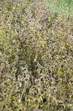 Wild wachsende Pflanzen auf Sonnenaufgang Stockfotos