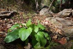 Wild wachsende Pflanzen, die Schönheit faszinieren lizenzfreie stockbilder