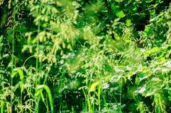 Wild wachsende Pflanzen im Wald beleuchtet durch Sonnenlicht Stockbilder