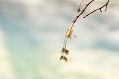 Wild wachsende Pflanzen im Winterwald Stockbild