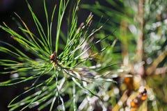 Wild wachsende Pflanzen in Lettland lizenzfreies stockbild