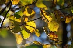 Wild wachsende Pflanzen in Lettland stockfotografie