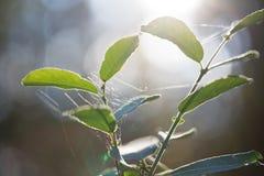 Wild wachsende Pflanzen in Lettland lizenzfreie stockfotografie