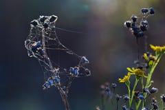 Wild wachsende Pflanzen in Lettland stockfotos