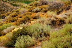 Wild wachsende Pflanzen und wilde Gräser Stockbilder