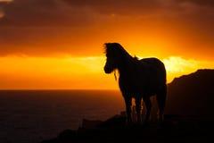 Wild walesisk ponny Royaltyfri Fotografi