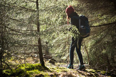 Into the wild. Walking into the light in a Scandinavian forest Royalty Free Stock Image