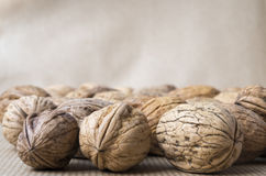 Wild Walnuts Royalty Free Stock Images