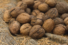 Wild walnuts Royalty Free Stock Photography