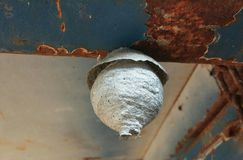 Wild wasp nest Royalty Free Stock Images