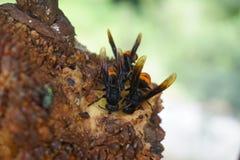 Wild wasps Stock Photo