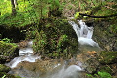 Wild water. Clear wild water in the alps Stock Image