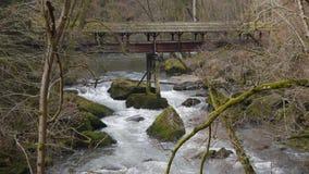 Wild water in natural park Eifel, Germany stock video