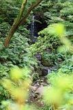 Wild waterfall through bushes royalty free stock image
