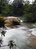 Wild Waters of Agua Azul, Mexico Royalty Free Stock Photo