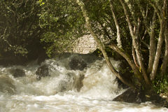 Wild waters Royalty Free Stock Photos