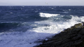 Wild waves. Wild swepyt up mediterranean sea hitting the rocks and seagull Stock Images