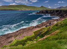 Wild waves at the coast of the Dingle peninsula. Waves hitting against the cliffs on the Dingle peninsula, Ireland Royalty Free Stock Image