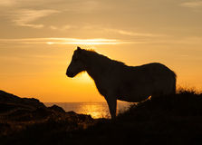 Wild Welsh Pony sunset Stock Photo