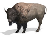 Wild West Bison Royalty Free Stock Photo
