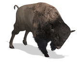 Wild West Bison Stock Photo