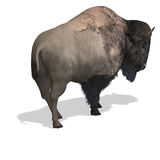 Wild West Bison Royalty Free Stock Photography