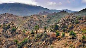 Wild westlich der Kanarischen Insel 'La Gomera ' lizenzfreie stockfotos