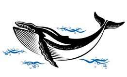 Wild whale. Big wild whale in ocean water in retro style Royalty Free Stock Photography