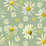 Wild daisies seamless pattern vector illustration