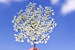 Wild white flower Stock Photo