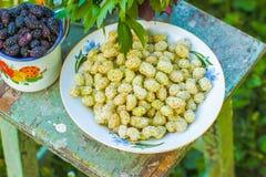 Wild white mulberry Royalty Free Stock Photo