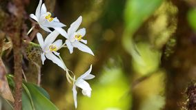 Wild white orchids moving with wind stock footage
