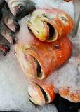 Wild whole red snapper on ice at fish market. Wild whole red snapper fish heads on a tray with ice at seafood market Royalty Free Stock Images
