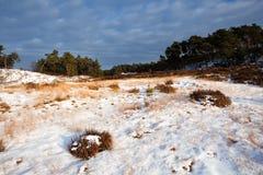 Wild winter landscape in Veluwe Stock Photos