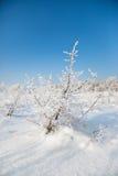 Wild winter scenery Stock Images